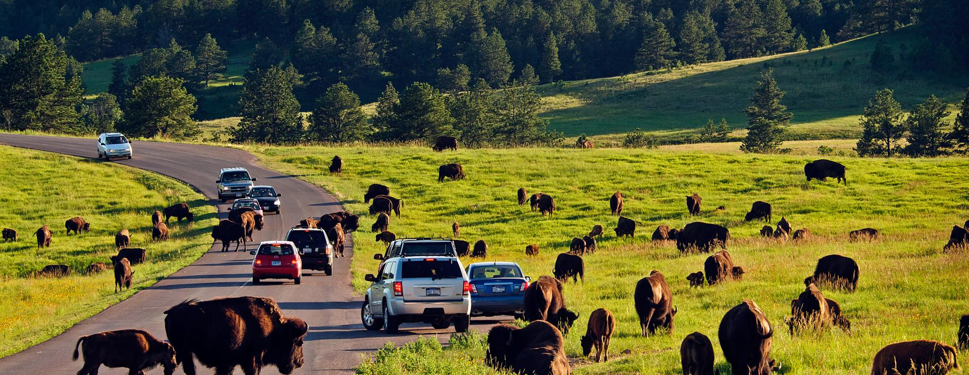 Top 10 Most Essential Things to Do on Your (first) Visit to Custer State Park
