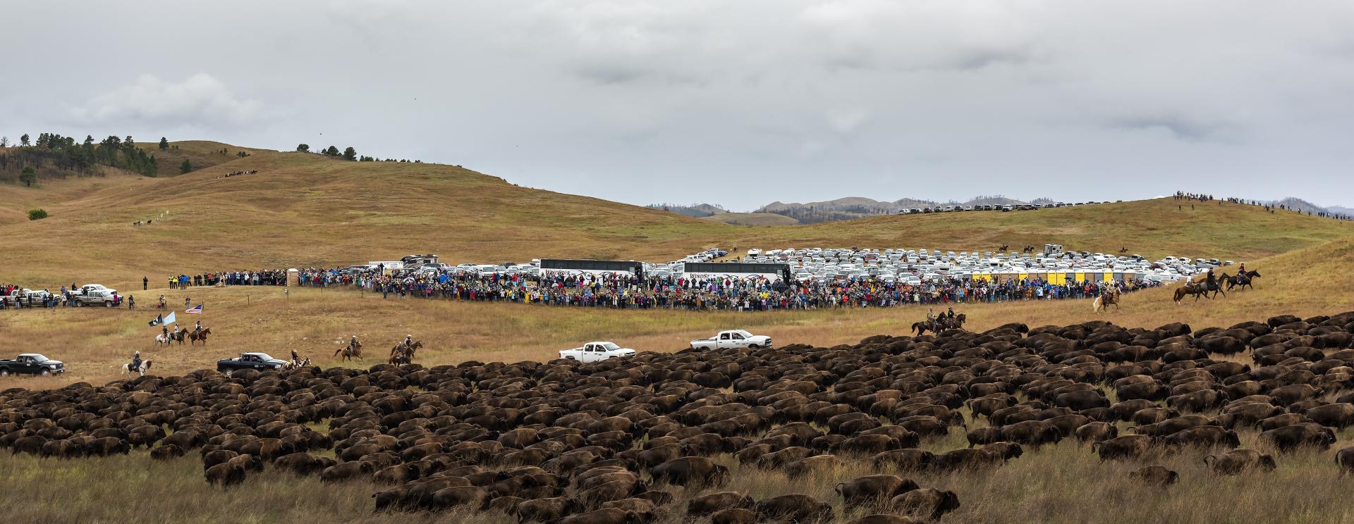 Everything You Need for an Incredible Buffalo Roundup