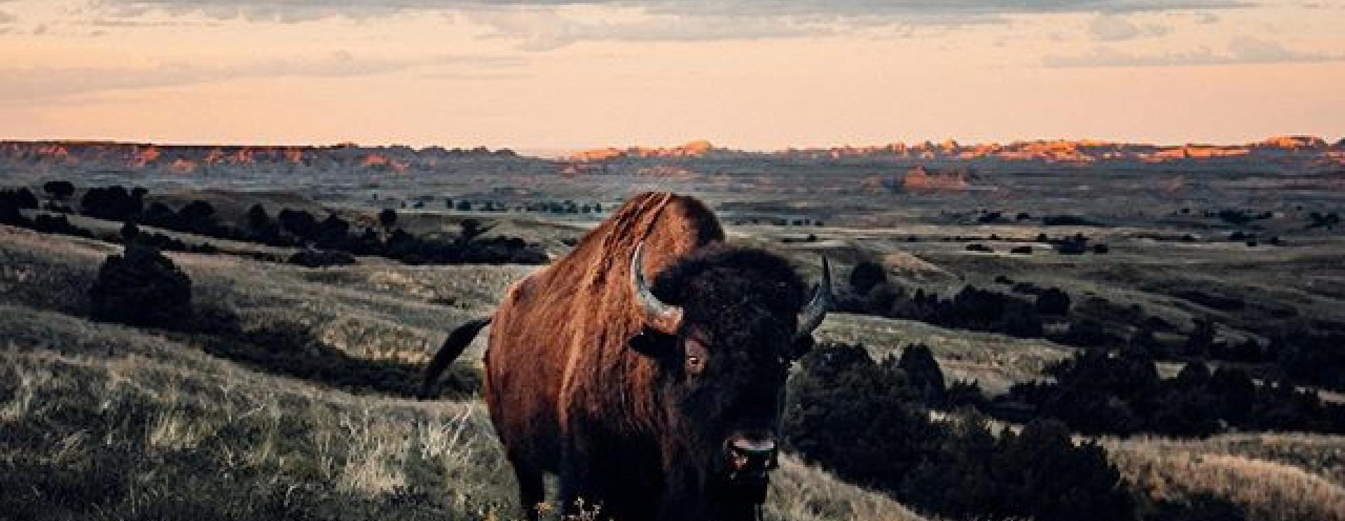 The 5 Most Remarkable Photos of the Black Hills and Badlands in October 2020