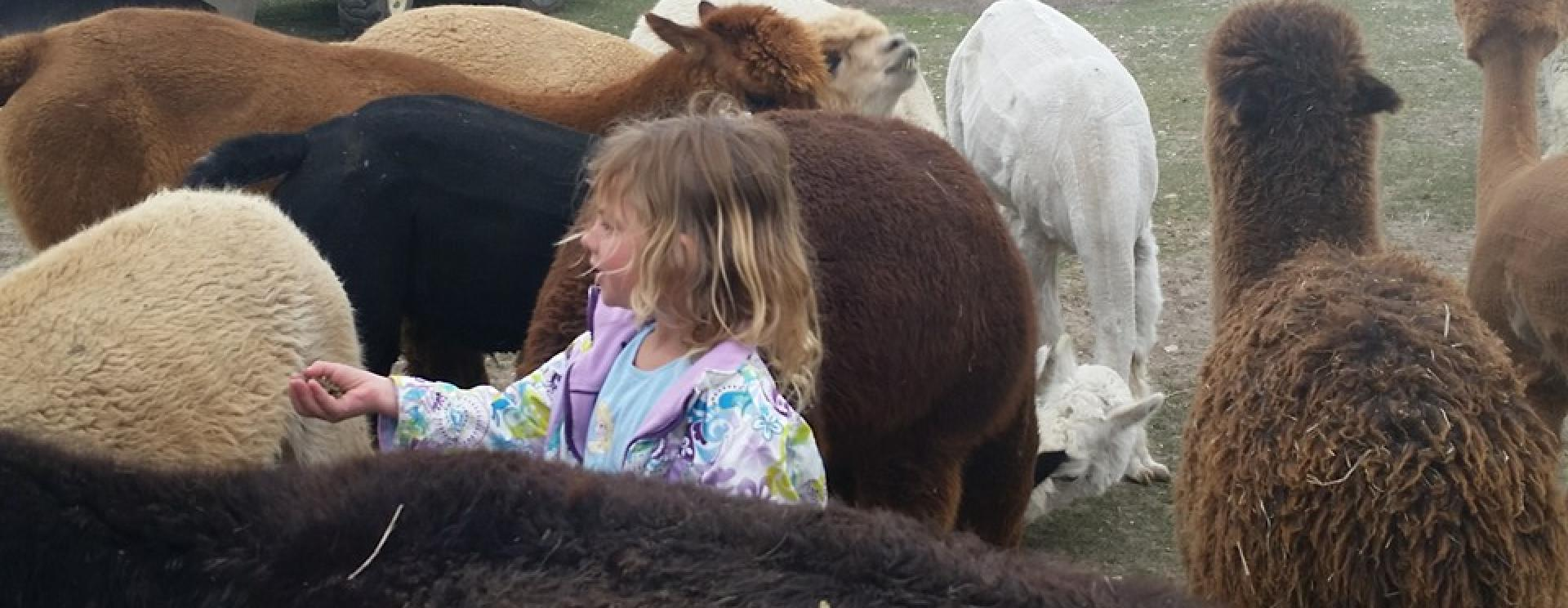 Caputa Alpacas and Guest Ranch