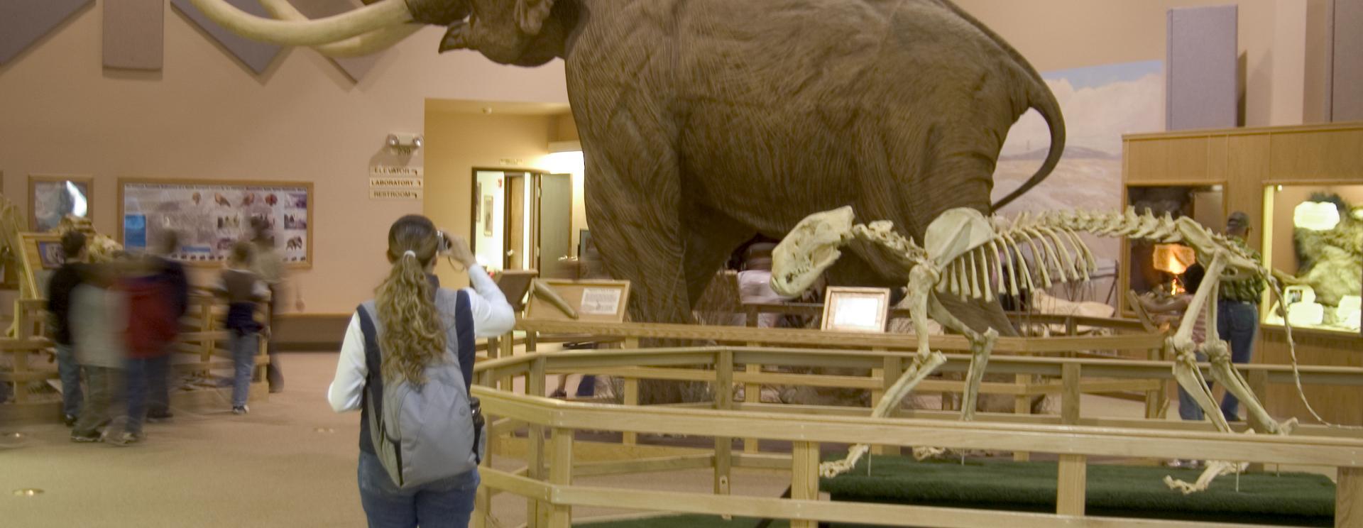 Mammoth Site