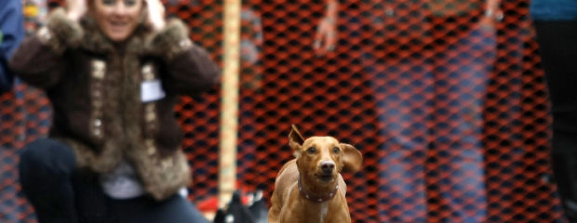Deadwood Oktoberfest Wiener Dog Races