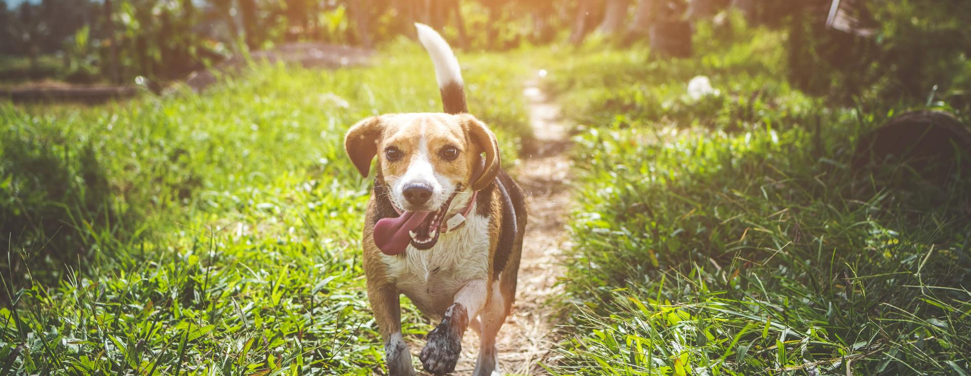 Family Fun Day: A Day for Dogs