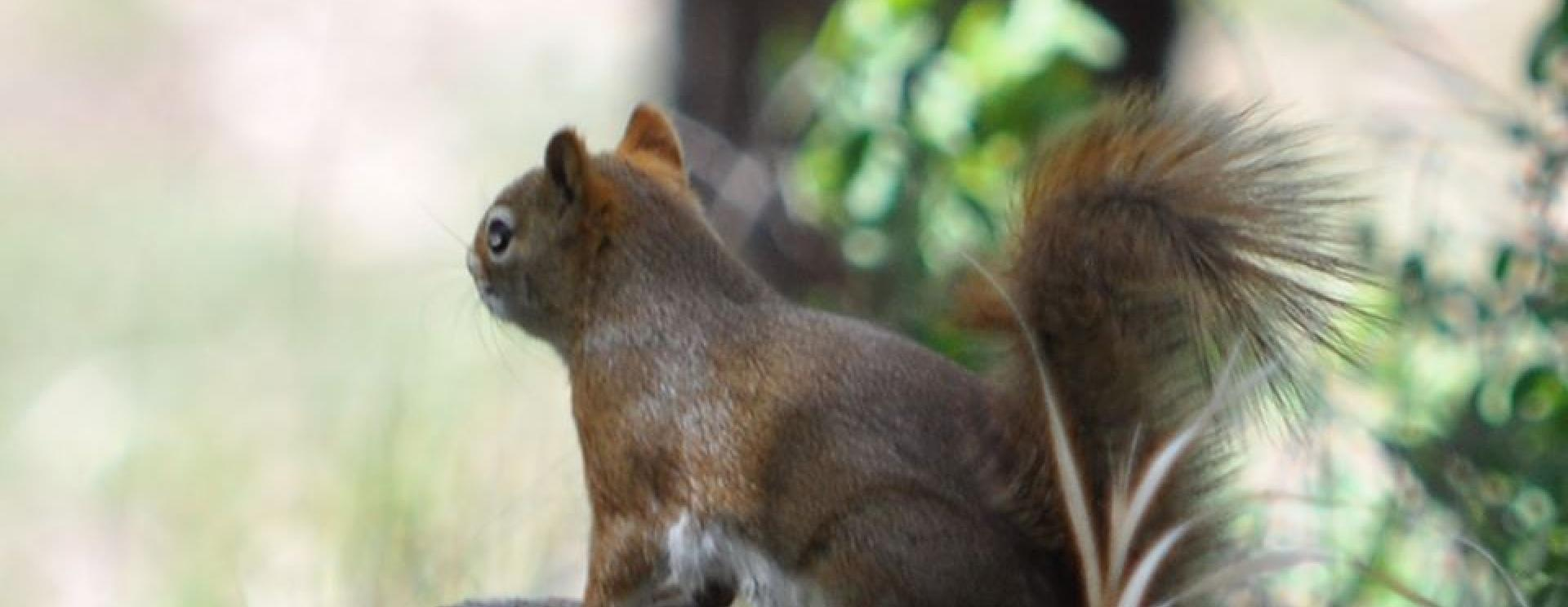 Junior Ranger Day / Animal Observations