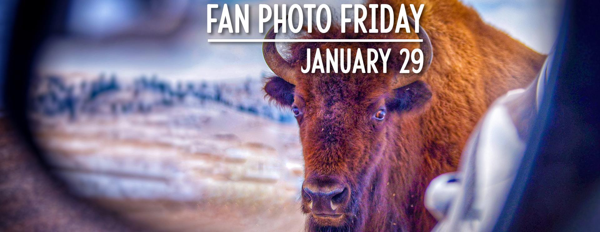Fan Photo Friday   January 29, 2021
