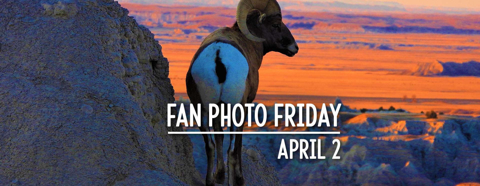 Fan Photo Friday | April 2, 2021
