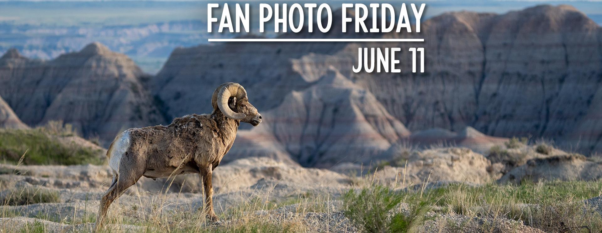 Fan Photo Friday   June 11, 2021