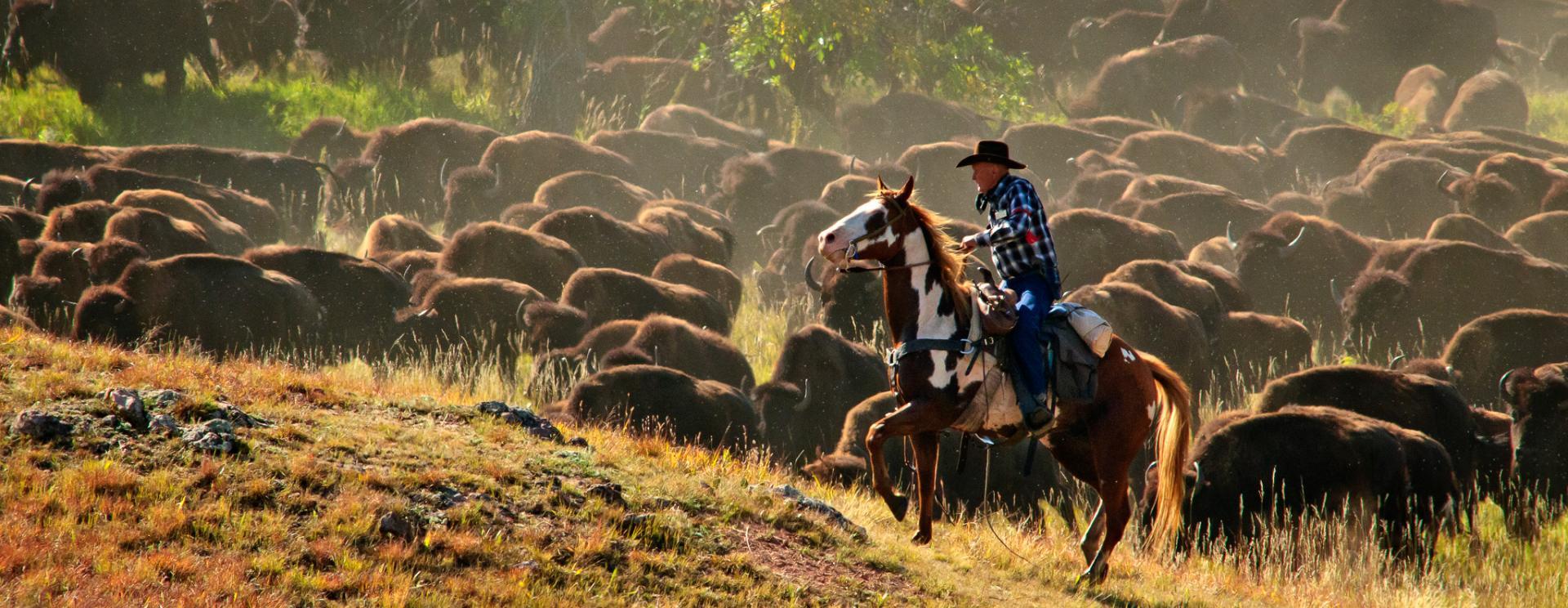 Custer State Park Buffalo Roundup & Arts Festival