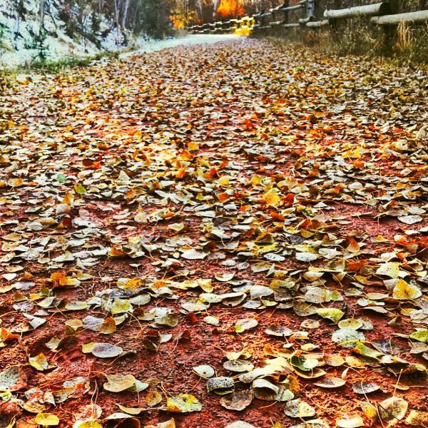 Nature's Yellow Brick Road