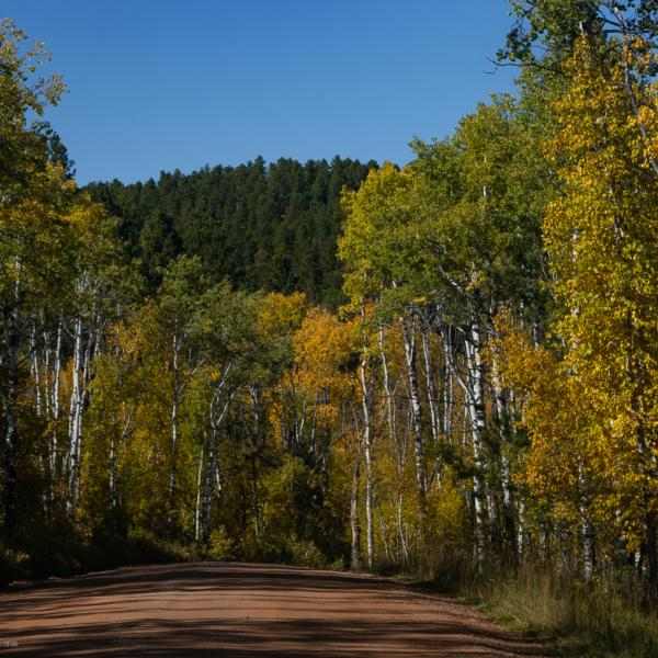 Autumn Gold in the Spearfish Canyon