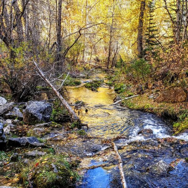 Beauty at Iron Creek
