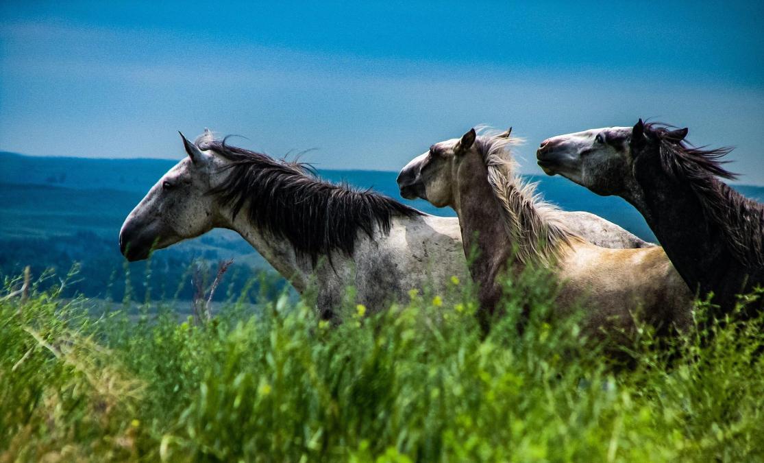 Spirit Of The Southern Hills At The Black Hills Wild Horse Sanctuary Fan Photofridayblack Hills Badlands South Dakota