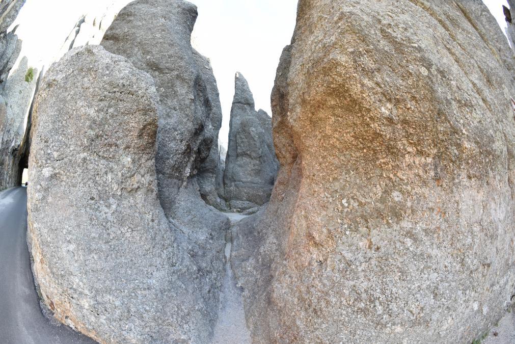 Nature's Hand