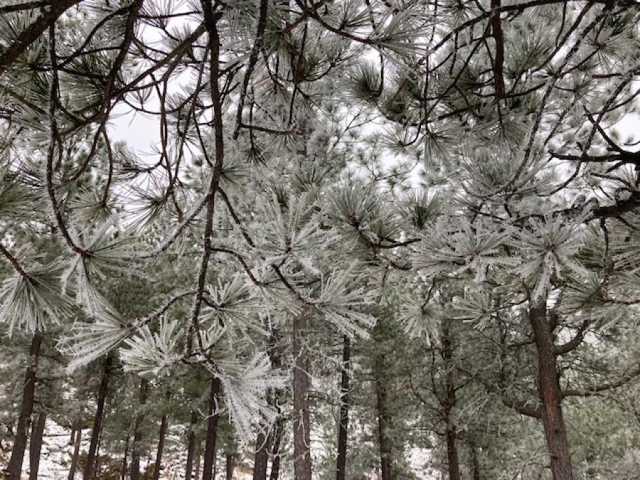 Frosty Trees at Stockade Lake