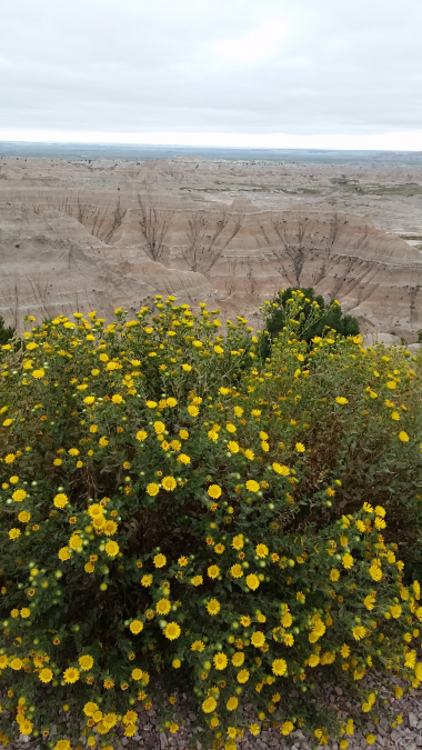 Cloudy Day in the Badlands