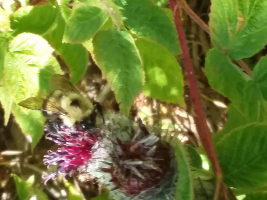 Bee getting pollen