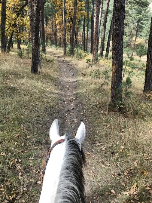 Riding Back to Camp