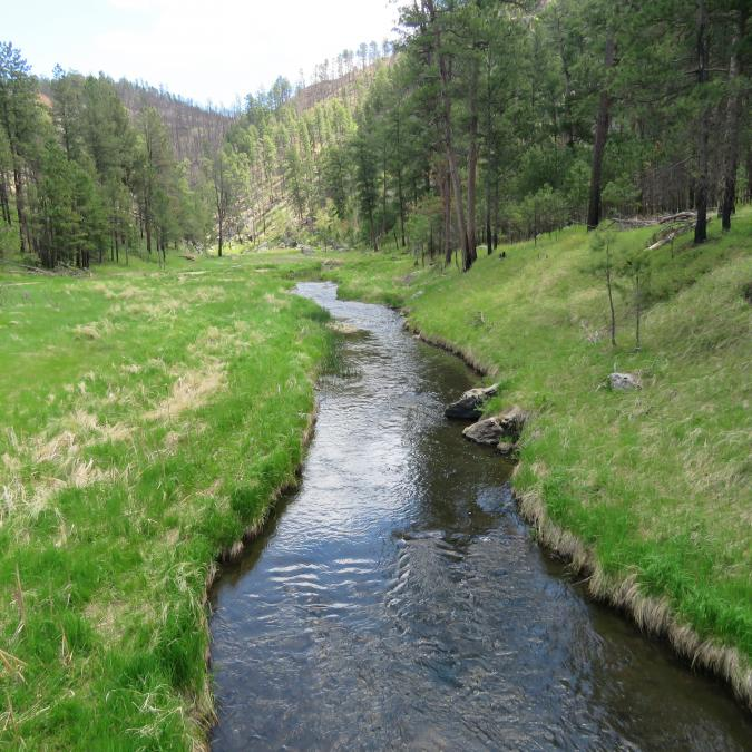 Taking a Different Path Through Custer State Park