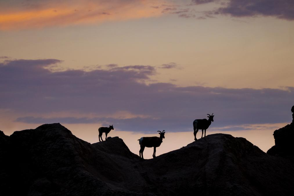 Badlands Silhouette