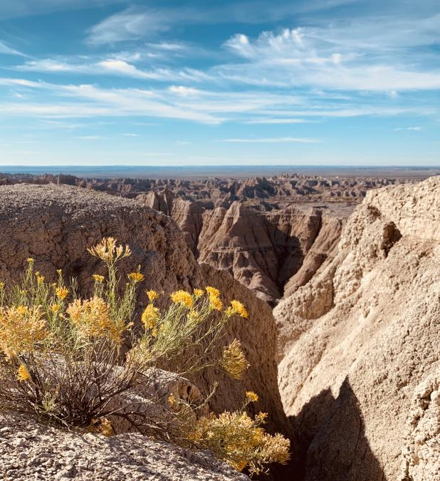 Sunny Day in the Badlands