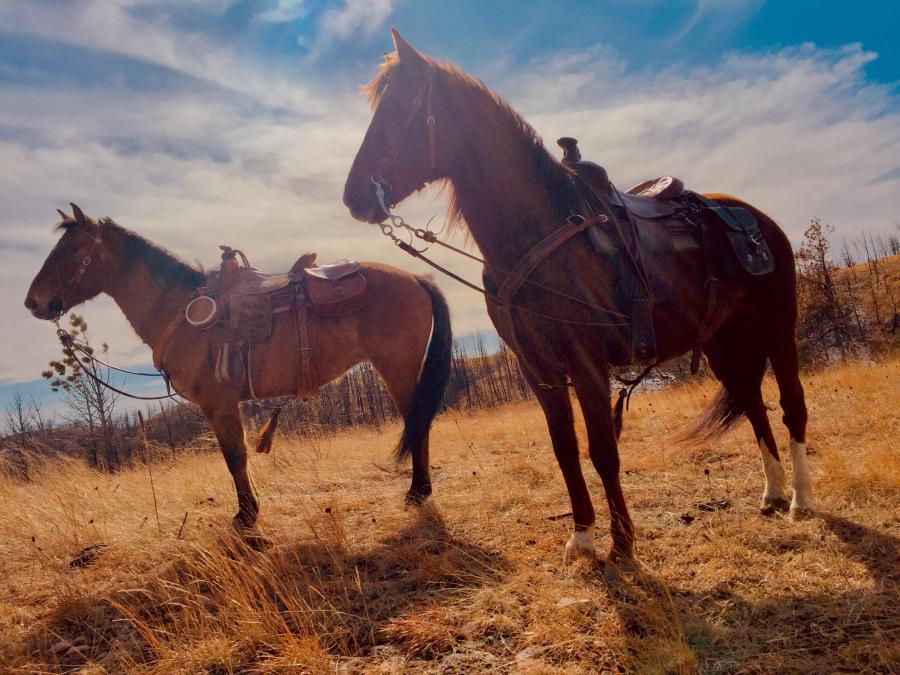 Beautiful Ponies ~ Custer State Park
