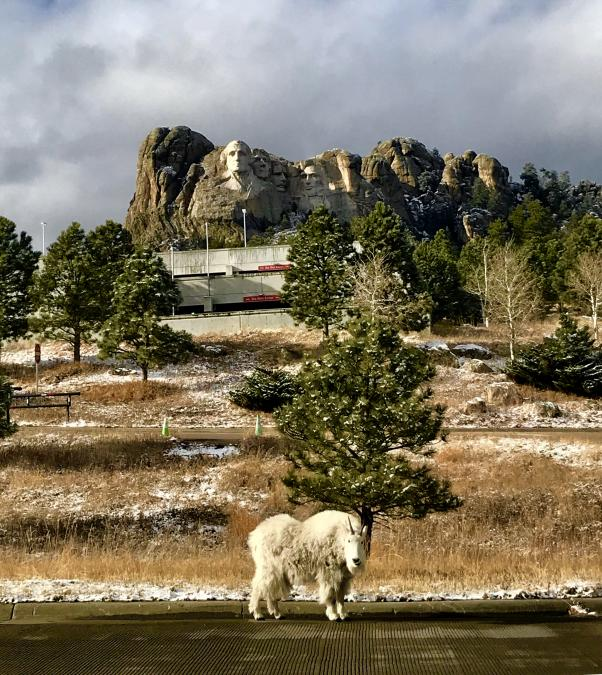 Snowy Rushmore Visitor