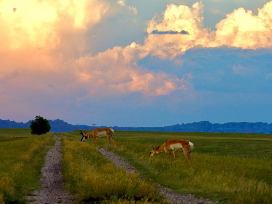 Afternoon on the Prairie