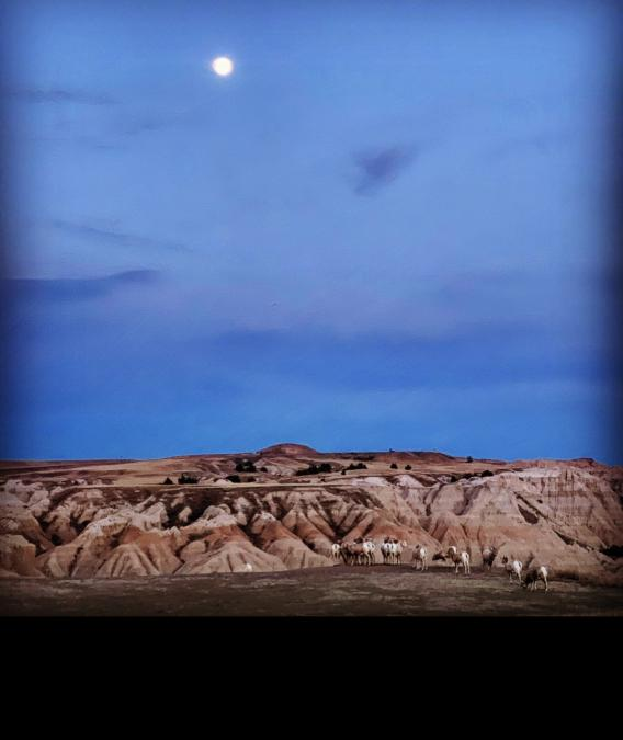 Full Moon Over the Badlands and The Bighorns