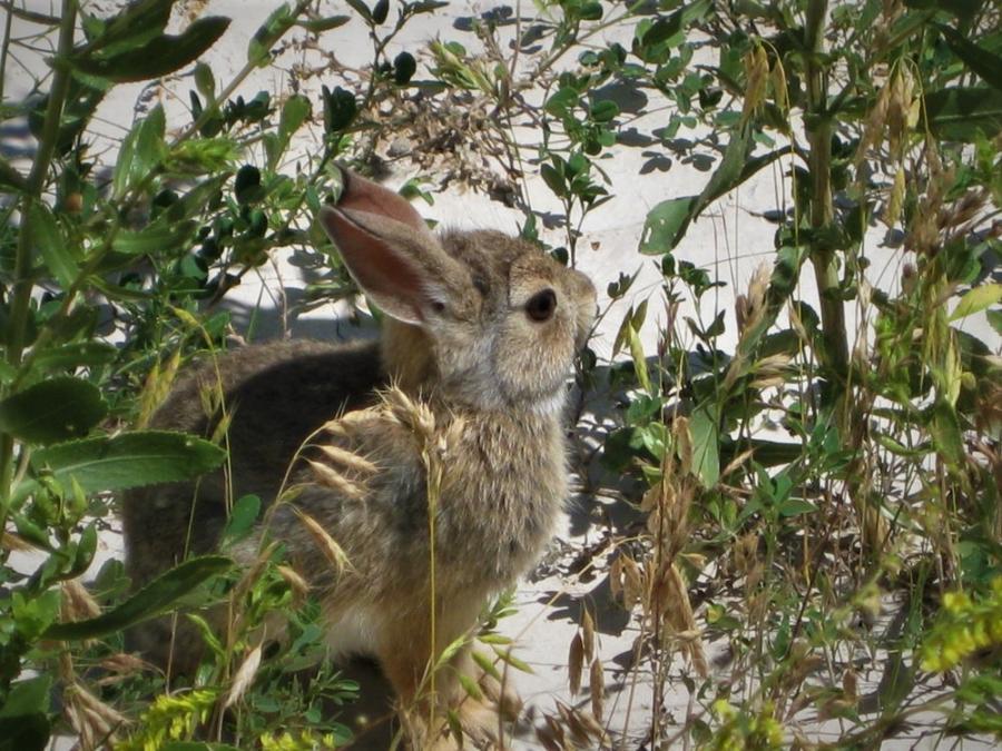Bunny in the Badlands