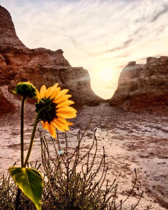 Flower in the Badlands