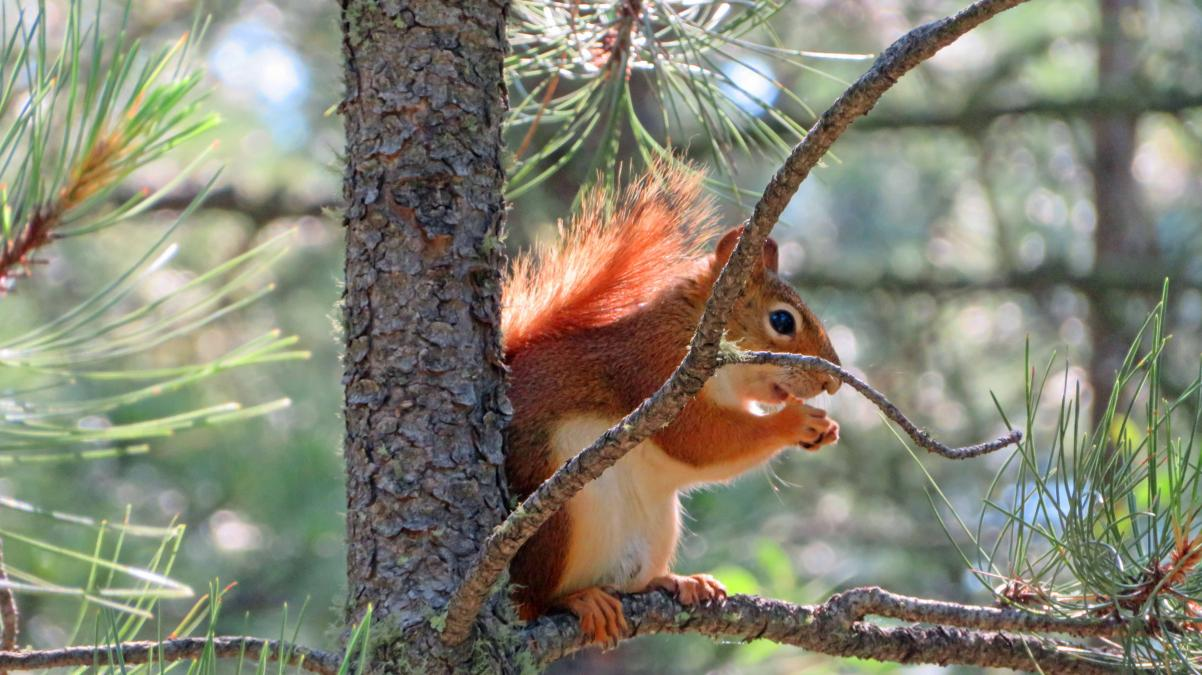 Being Squirrely