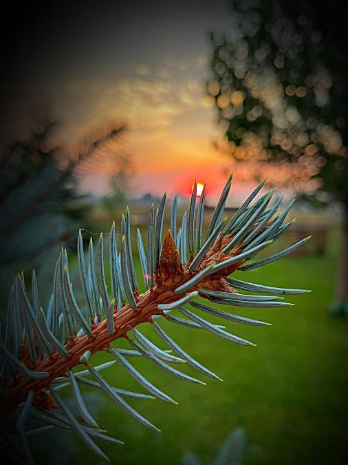 Through the Spruce