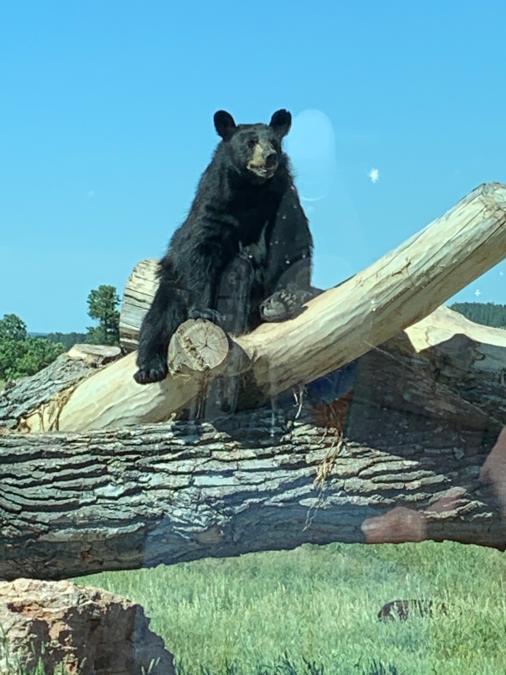 Just Hangin at Bear Country