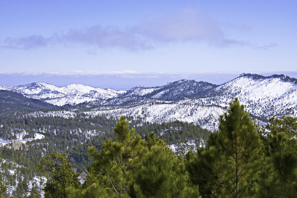 St. Patrick's Day in Custer State Park