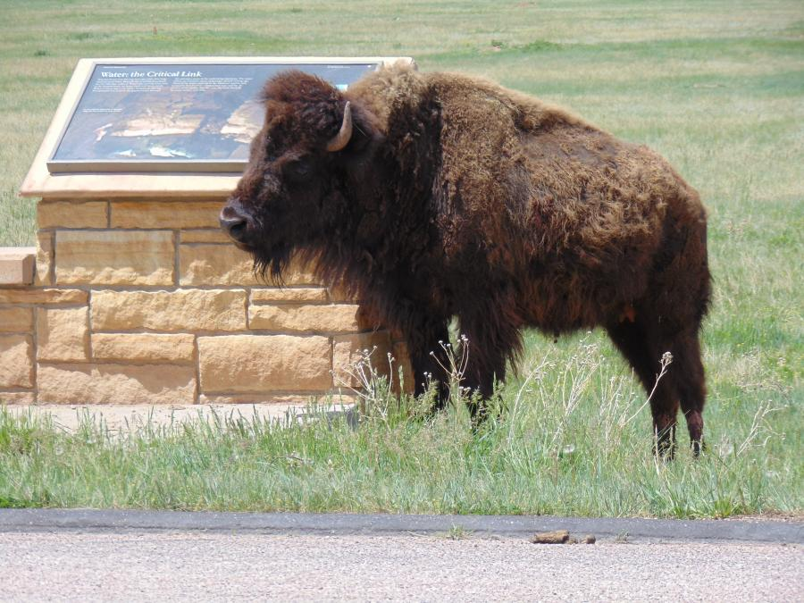 Custer State Park 2014