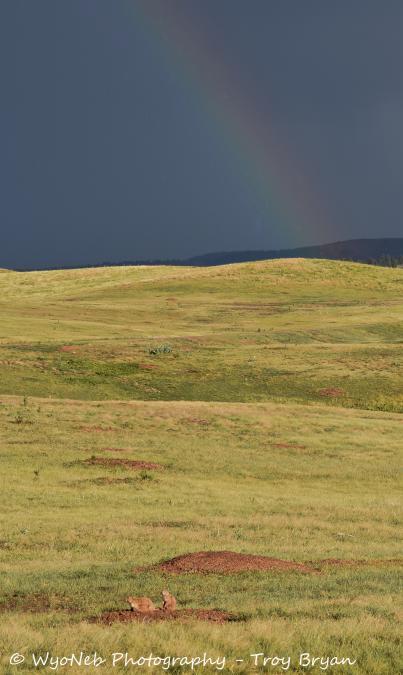 Rainbow and Prairie Dogs