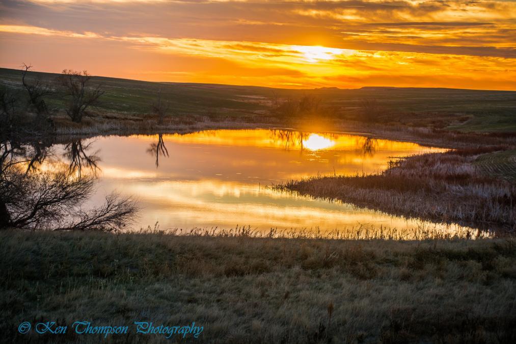 Golden Prairie Pond Sunrise