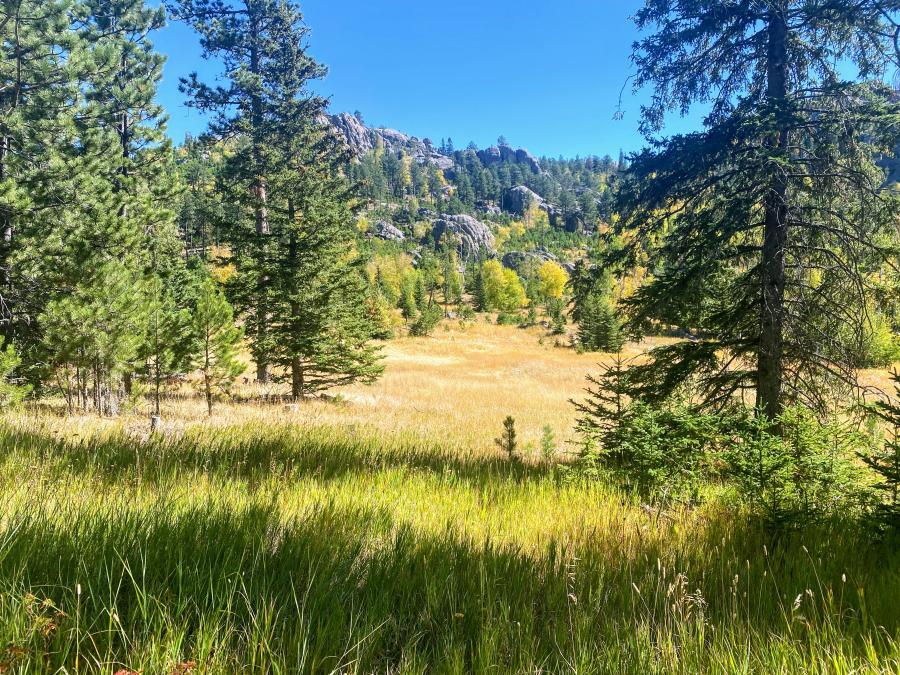 Beauty in the Meadow