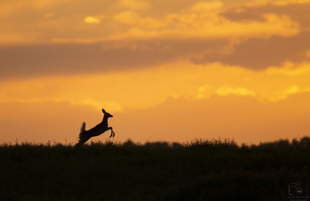 Sunset Jumper