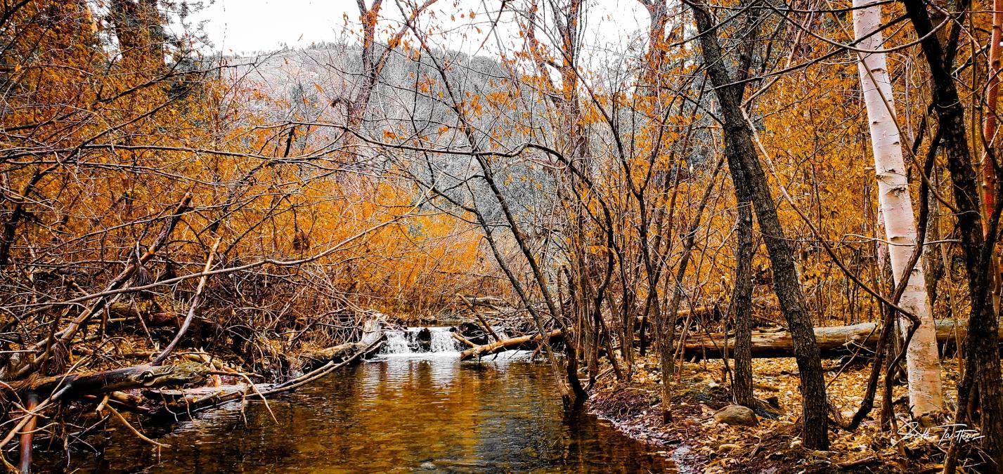 Amber and white at Elk Creek