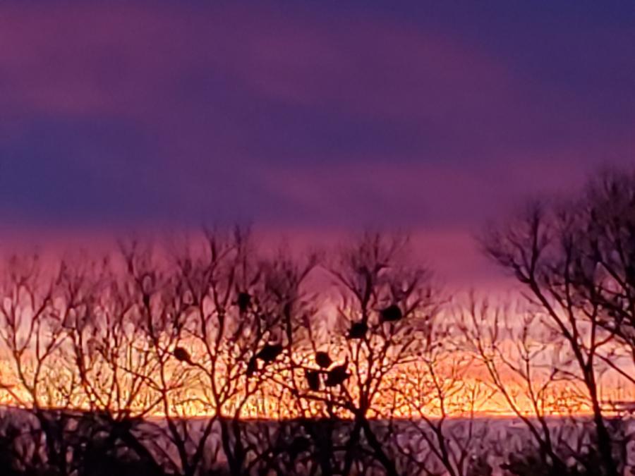 Wild Turkey Sunrise