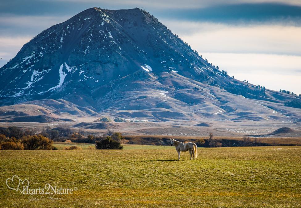 Pretty Horse On the Prairie