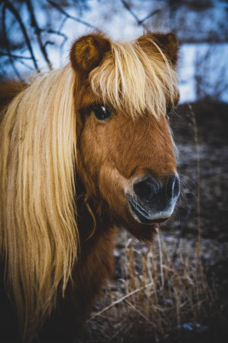 Yay or Neigh on my bangs?