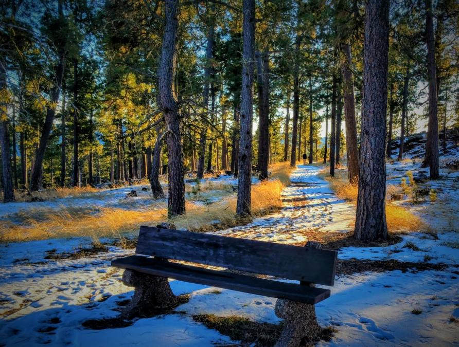 Inviting Walk in the Black Hills