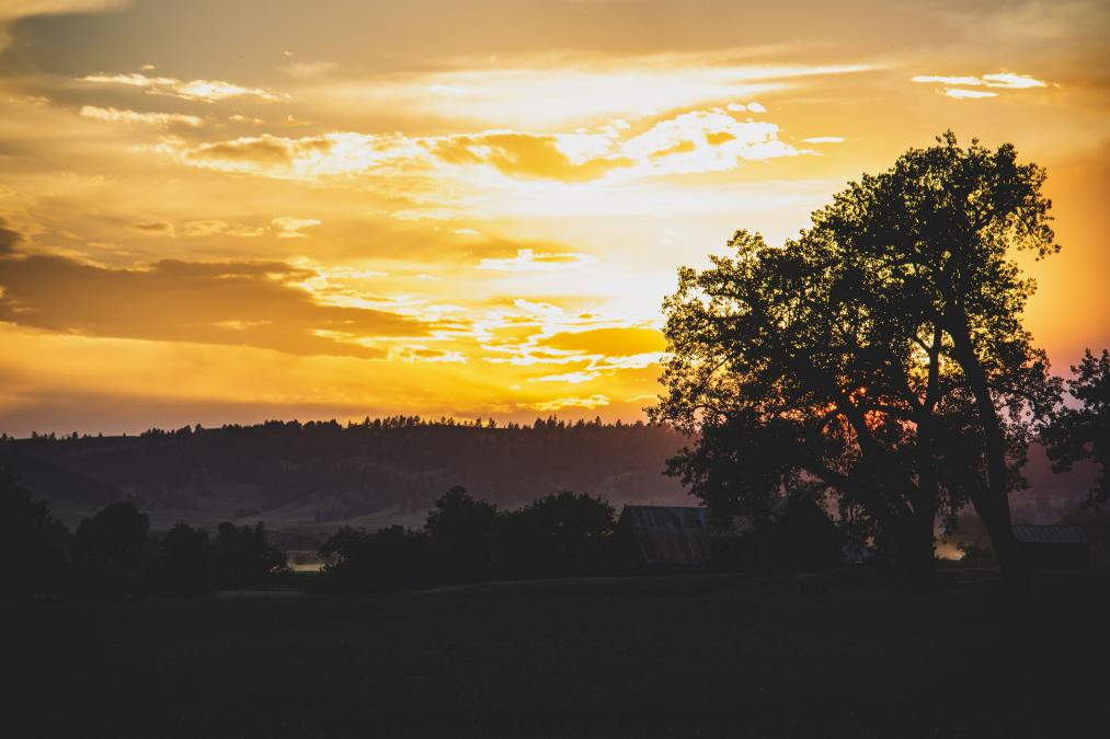 Summer Evening Gold