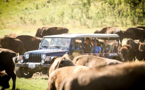 Buffalo Safari Jeep Tours