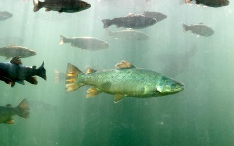 D.C. Booth Historic National Fish Hatchery & Hector Von Bayer Museum