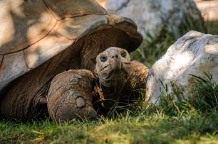 Animals & Wildlife Attractions