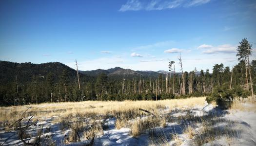 The Winter Wonderland of the Willow Creek Loop