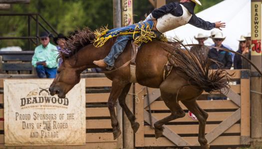 Kick Up Dust at the Top Black Hills and Badlands Rodeos this Summer